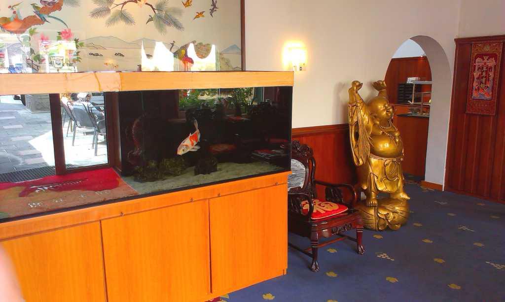 Aquarium und Buddha
