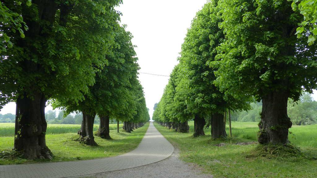 Allee vom Schlossgut zur Ostsee