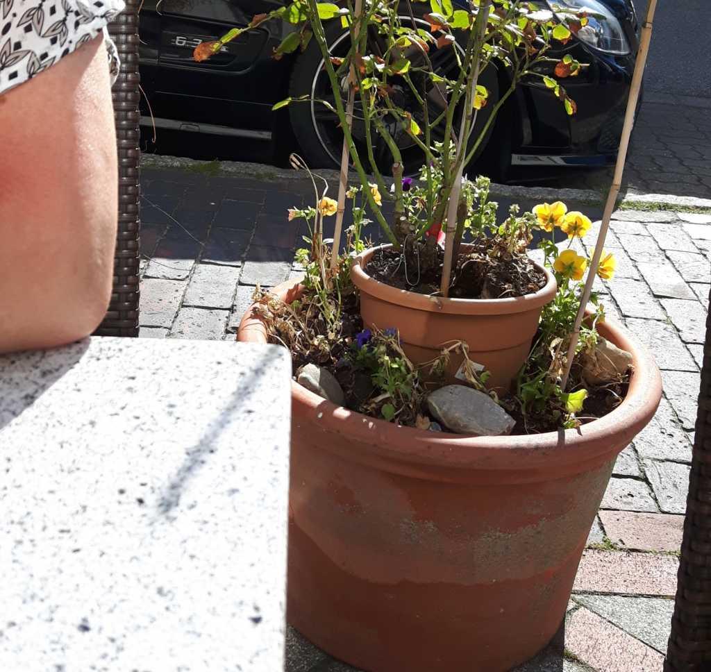 Blumen Außenbereich