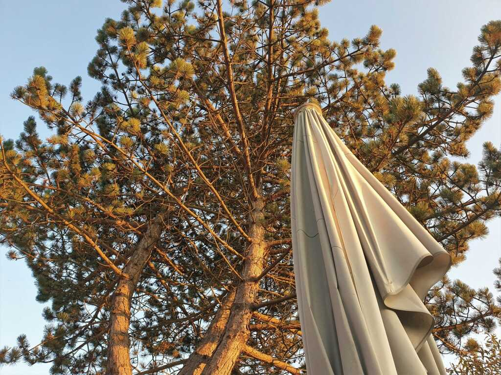 Platz unter dem Baum
