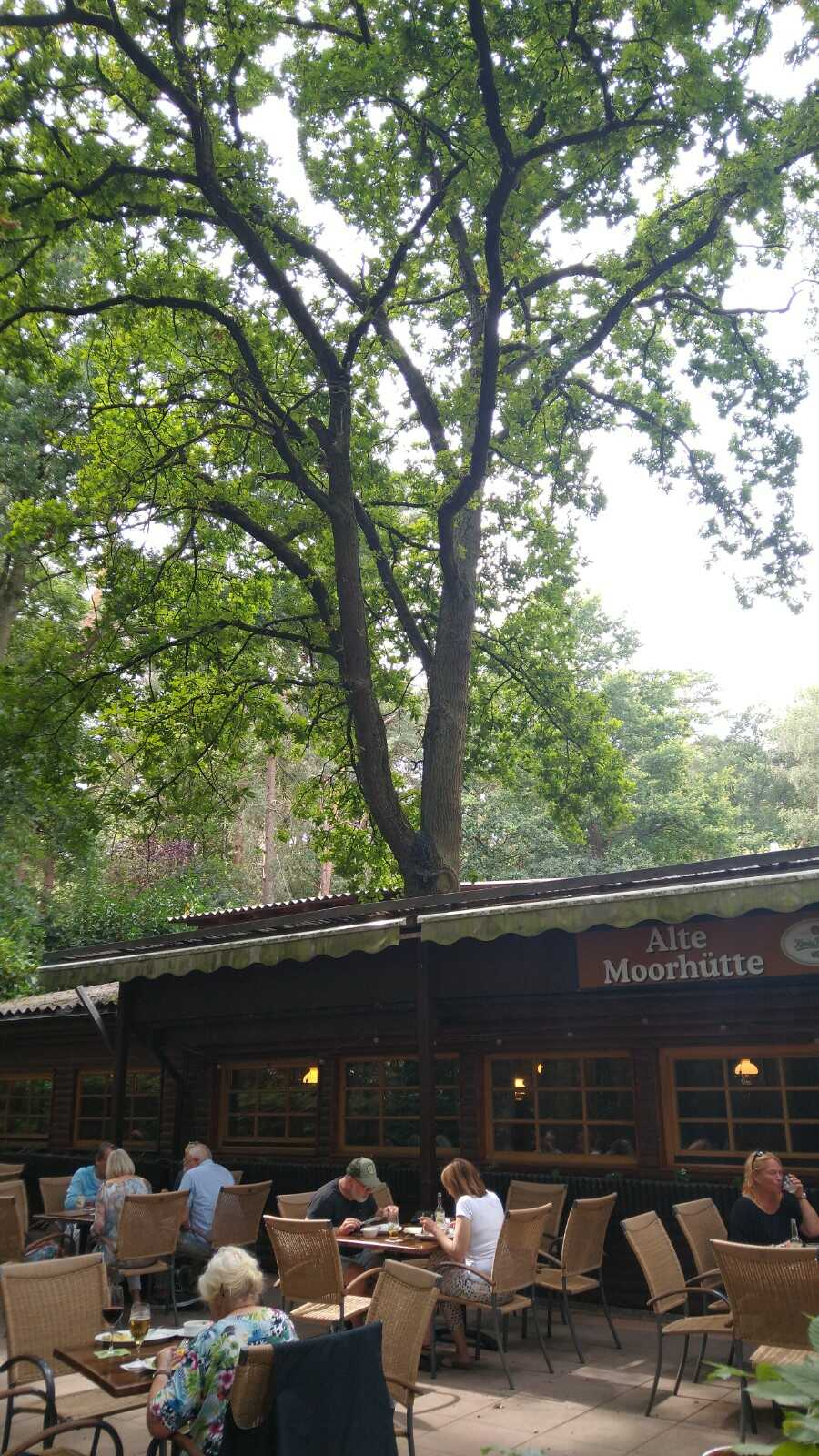 der Wald ist im Gasthaus