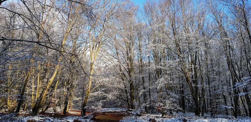 1. Weihnachtstag und ein bisschen Schnee
